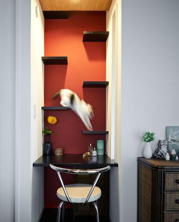 猫と暮らす家づくり。ストレスフリーな6つの工夫